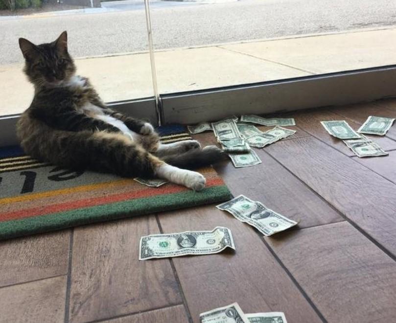 face bani pisică cum se fac 2 bitcoins pe zi